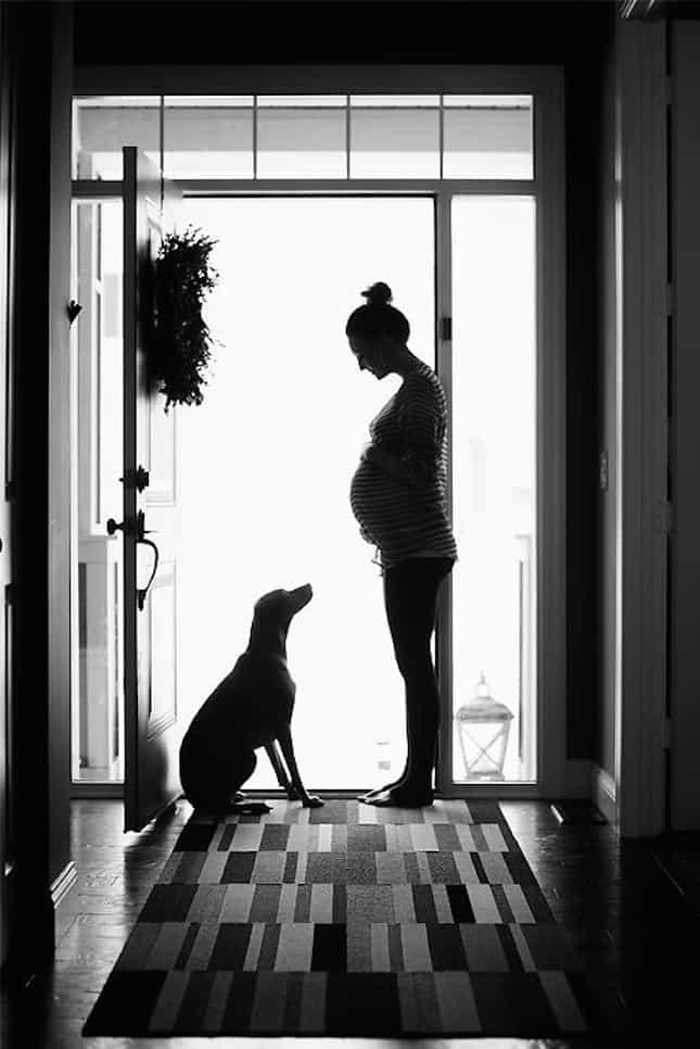 silhouette dog pregnancy